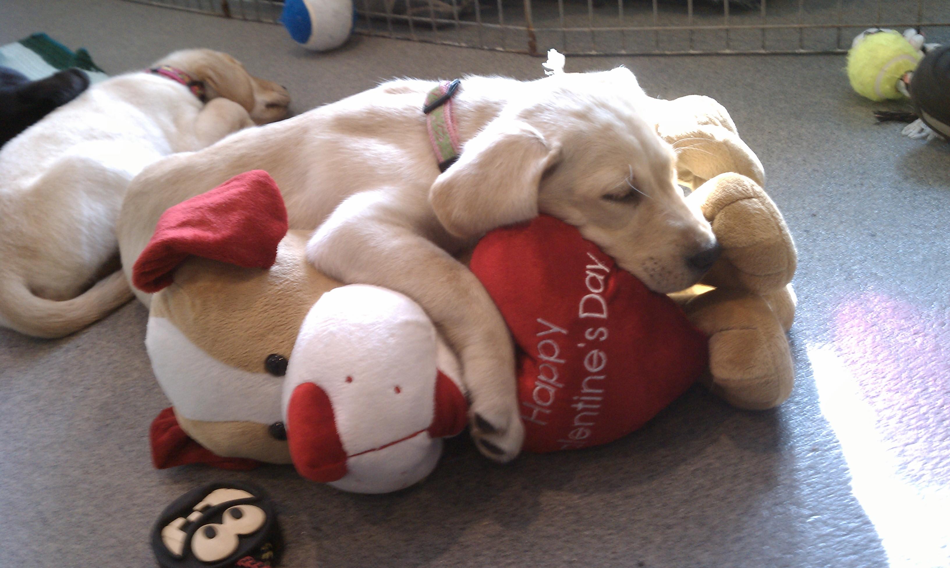 heres a bonus valentines day dog