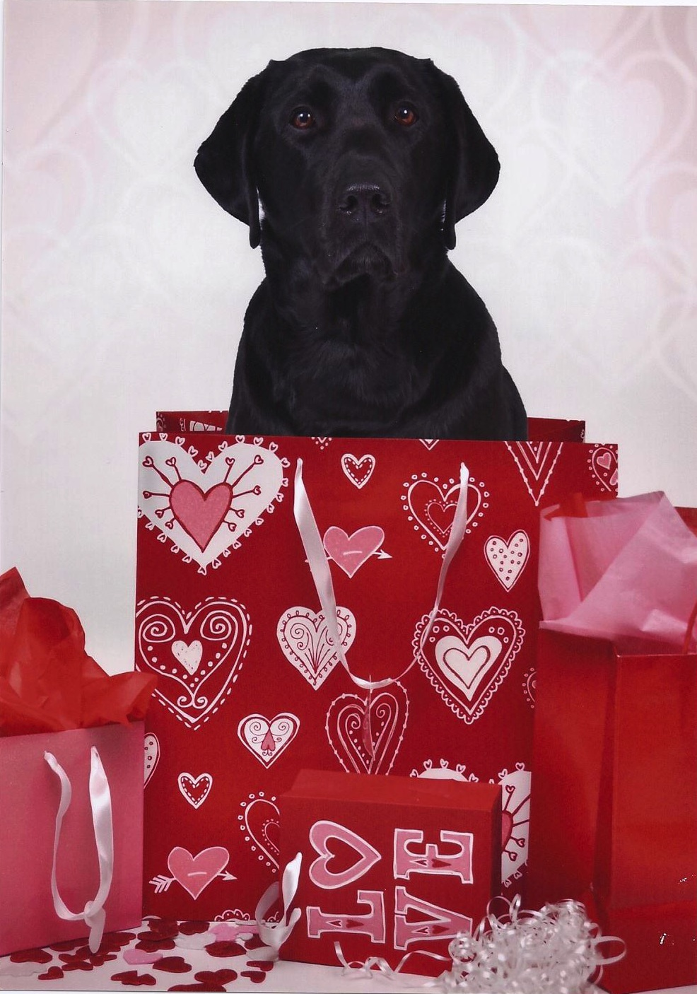 Valentine s day assistance dogs - Valentines day pictures with puppies ...