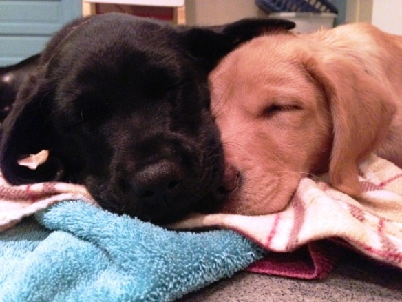 (2012-11) CJ (left) and Abbey taking a nap