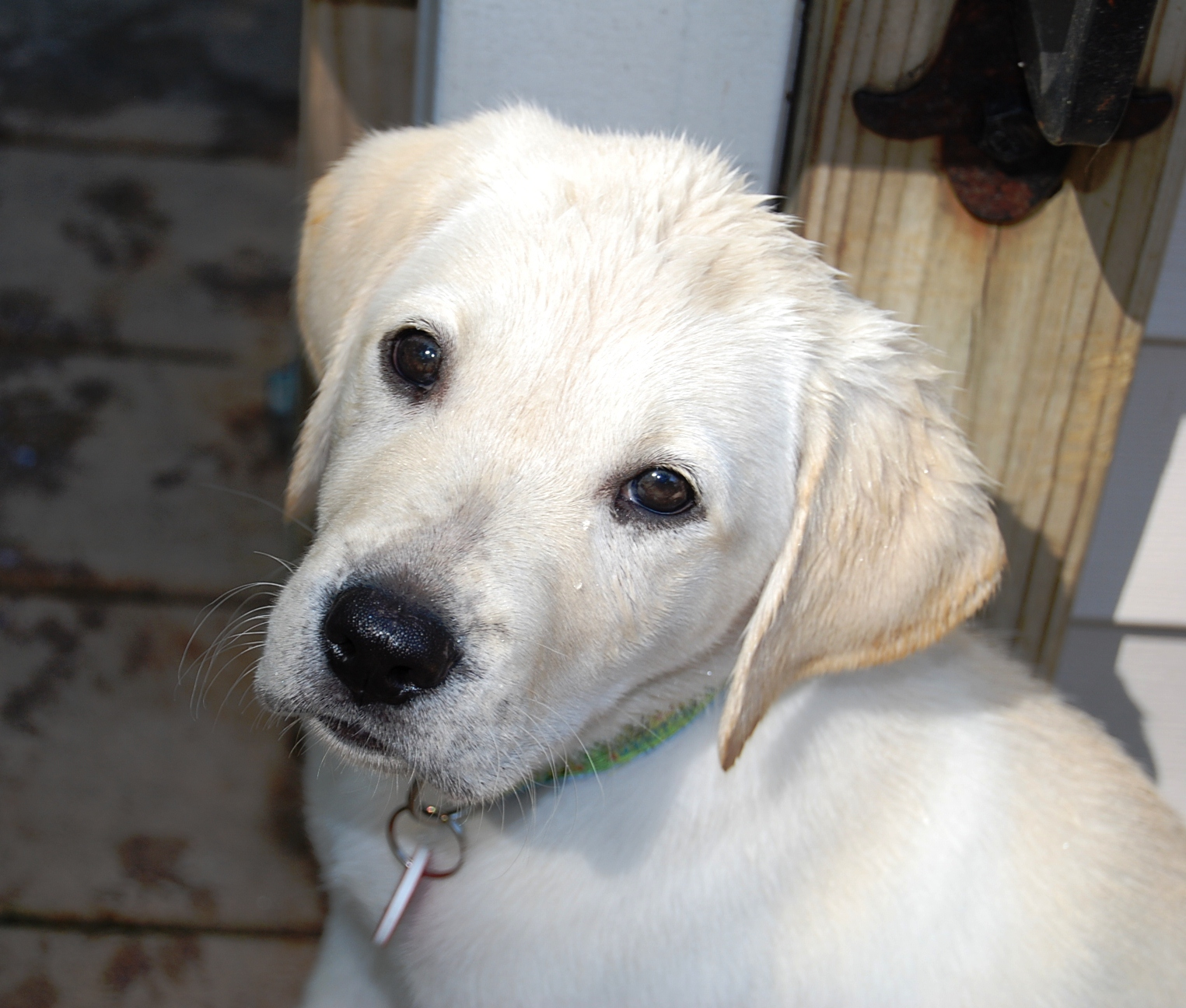 11AM Cute Puppy — Toby has the face of an angel… and the heart to