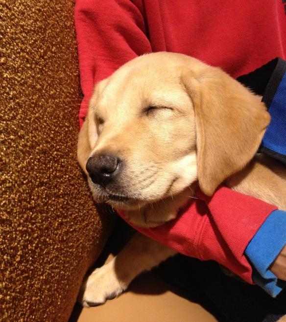 (2012-10) maesro fast asleep