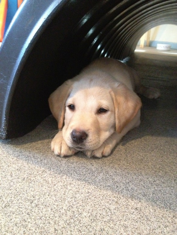 (2012-11) Penny resting