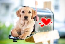 valentine puppy mailbox