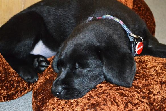 (2013-01) shevlin fast asleep