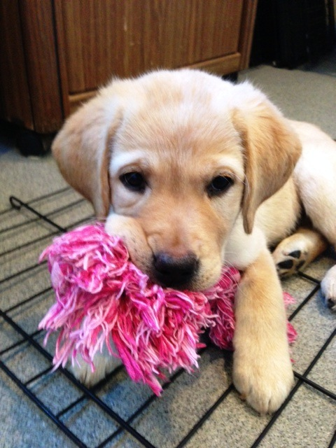 (2013-02) holly with toy