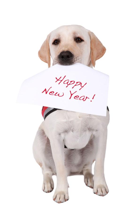 EDITED New year© tbp_MURRAY_09833