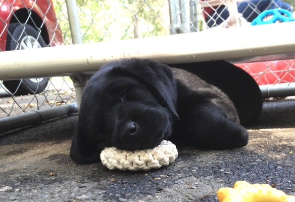 (2012-08) hope asleep with her toy