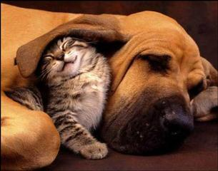 Cute-Kitten-Hound-Dog-1_medium