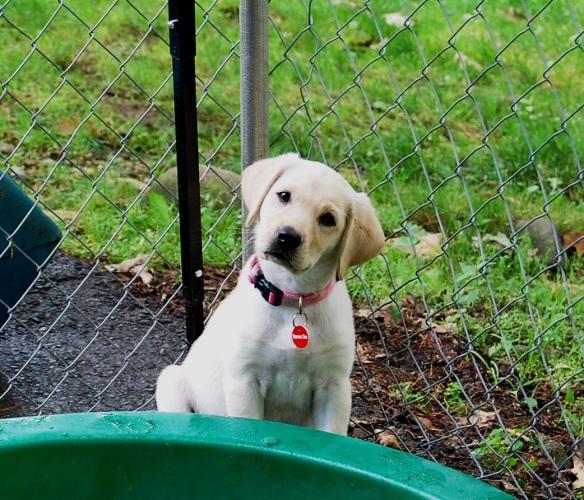 (2012-07) sasha playing outside