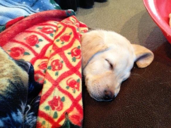 (2012-11) penny fast asleep
